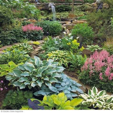 the perfect hosta spot want to get the best looking hostas it all starts with finding the
