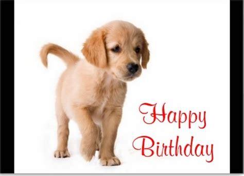 birthday puppies image gallery happy birthday puppy