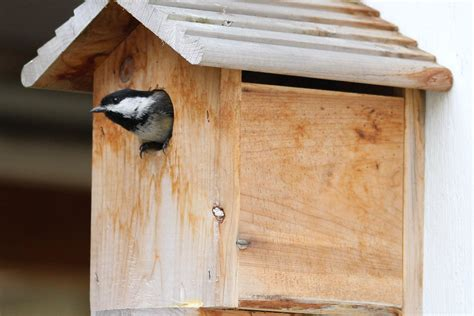 chickadee bird house plans chickadee bird house www pixshark com images galleries