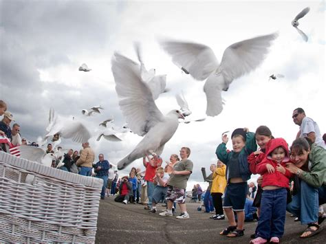 theory   homing pigeons find home