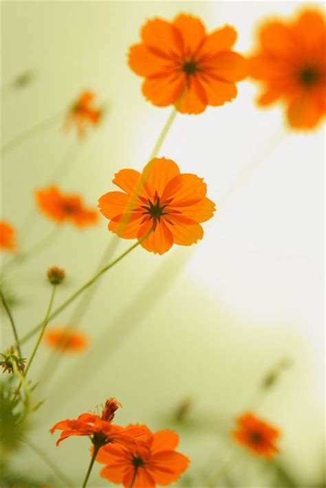 colorful flowers picture orange flowers in bloom light 25 best ideas about orange flowers on
