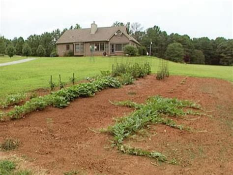 Selecting The Best Location For A Garden Diy Best Location For Vegetable Garden