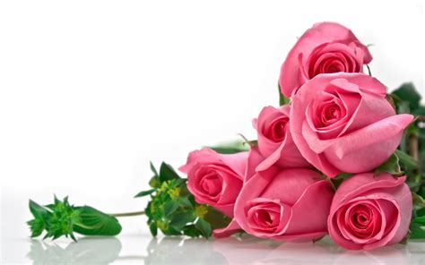 google pink roses wallpaper hd flowers rose pink căutare google red rose