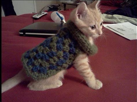 pattern knit cat sweater 1000 images about crochet items for animals on pinterest