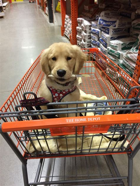 are dogs allowed at home depot stores that allow dogs popsugar pets