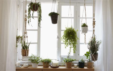 Window Plant Hanger - how to grow a window garden and create a macram 233 plant hanger