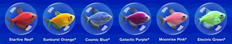 glofish colors glofish tetra or