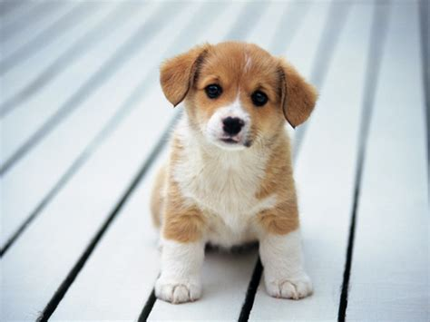 how to get a puppy to gain weight how to make your puppy gain weight pets world