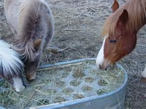 hay feeder hay hay