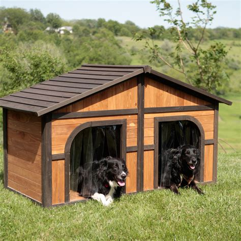 how to heat an outdoor dog house boomer george darker stain duplex dog house with free dog doors dog houses at