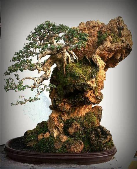 images  bonsai  pinterest trees bonsai