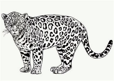 cheetah coloring page free coloring pages and coloring
