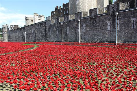 poppies  tower  london commemorate