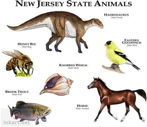 new jersey state colors state animals of new jersey line and color