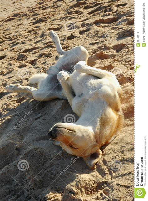 relaxers for dogs relaxed stock images image 22119314