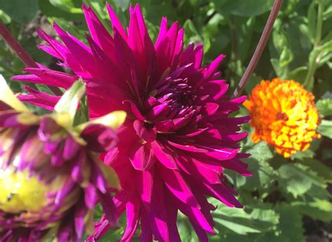 plant lovers 100 plant lovers plant lovers the future kept a