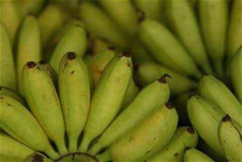 tiny banana the varieties of bananas home guides sf gate