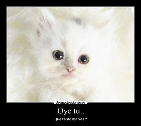 5 imagenes de ositos tiernos con frases cariosas carteles gatito lindura pequeno desmotivaciones