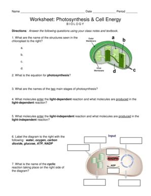 Photosynthesis Energy Worksheet by All Worksheets 187 Photosynthesis Worksheets Printable