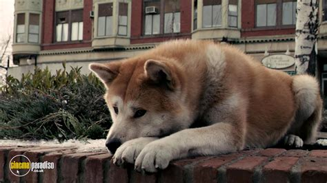 a dogs tale rent hachi a s tale 2009 cinemaparadiso co uk