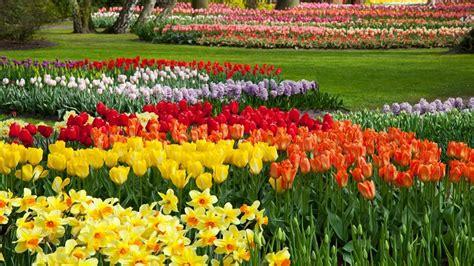 fiori per aiuola 10 piante da aiuola fioriscono in primavera