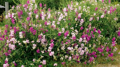 Garten Bepflanzung Am Zaun 5206 by Garten Bepflanzung Am Zaun Garten Fresh Garten