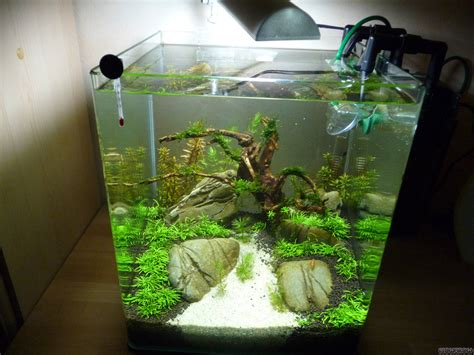 nano becken flowgrow aquascapeaquarium