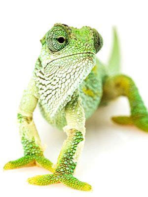 lizards in house good or bad best 25 exotic pets ideas on pinterest