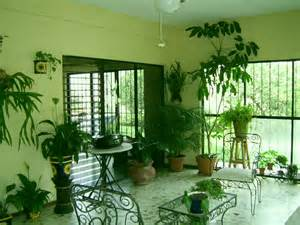 home decoration with plants plants inside rooms