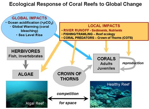 coral bleaching diagram coral reefs and world indigenous connections
