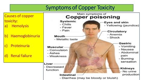 Copper Detox by Copper Metabolism And Its Clinical Significance