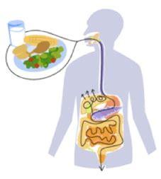 indigestione alimentare d 233 finition de digestion concept et sens