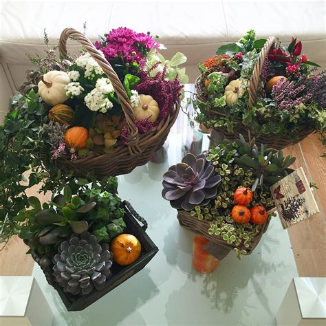 festive decorations order decoration with ivy and succulents delivery in riga