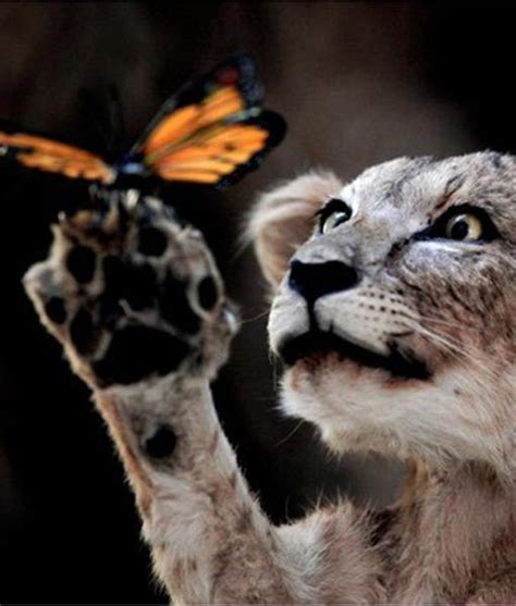 film butterfly lion beautiful museums and the beauty on pinterest