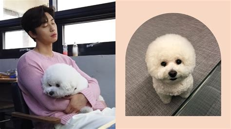 guide  park seo joons adorable dog simba