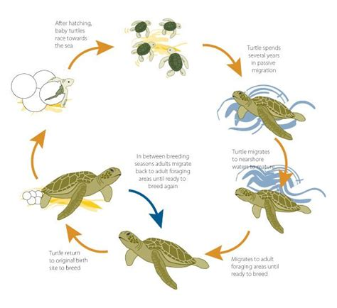 a sea of new media transformation of the american press books green sea turtle chart characteristics of sea turtles
