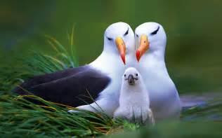 family beautiful birds wallpaper