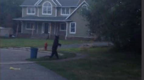 walking on hind legs new jersey spotted walking on hind legs abc news