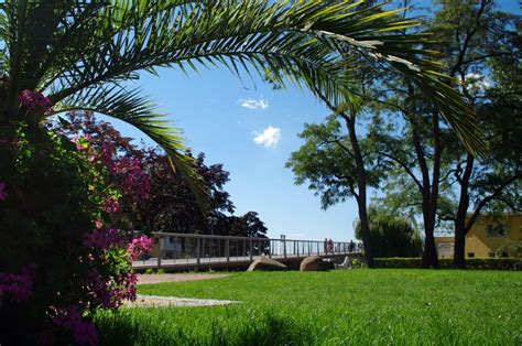 panoramio photo of like a palm tree in germany