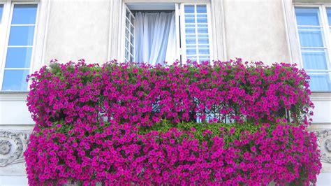 decoracion de ventanas navideñas con mallas para balcones jardinera venta de libros susaeta ediciones