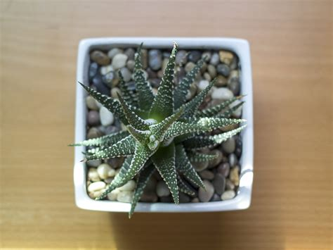 little plants how to care for succulents and cacti in winter espoma