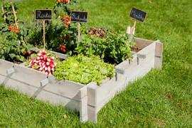 Résultat d'images pour image jardin potager