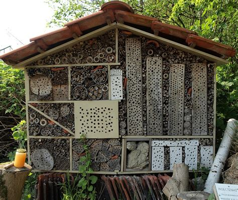 bug house insect house house crazy