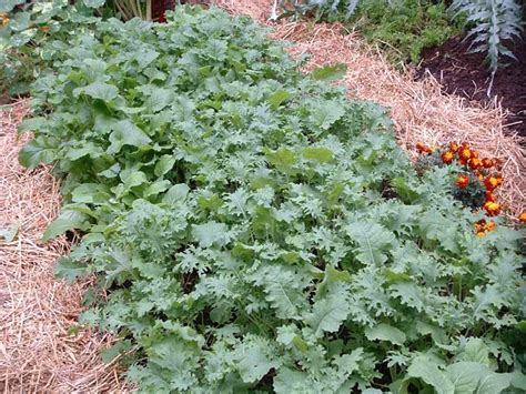 Newspaper Garden Mulch Veggie Gardening Tips Mulch In Vegetable Garden