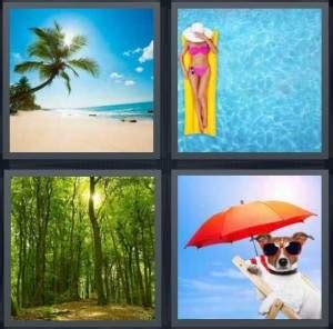 hot drink 8 letters 4 pics 1 word answer for beach pool forest dog heavy