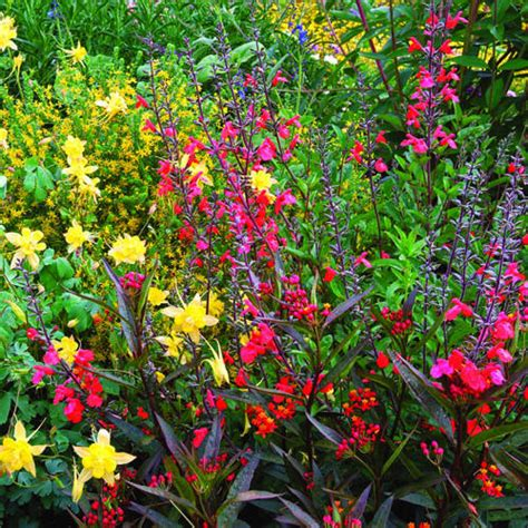 More Wildlife Friendly Plants Sunset Hummingbird Garden Flowers