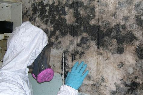 11 ways to remove mold in basement mold in basement prevention