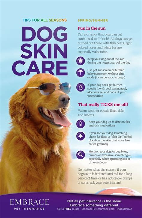 Summer Care 6 Useful Strategies by 217 Best Beat The Heat With Your Pets Images On