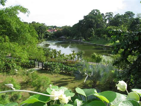 Garden Botanical Singapore Botanical Gardens A Visit Of Wondrous Nature