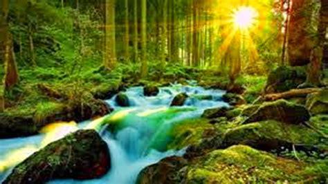 imagenes de la naturaleza raras fotos imagem natureza imagens imagem natureza clickgr 225 tis